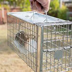 Animal and Rodent Control